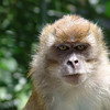 Evil Monkey. Not a happy chappy!